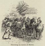Threshing by Means of Horses