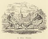 A Dog Fight