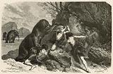 L'homme a l'epoque du grand ours et du mammouth