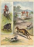 Pig Sticking and Hunting the Kangaroo