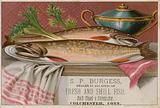S P Burgess, trade card