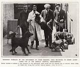 Rendered homeless by the internment of their masters, dogs belonging to enemy Aliens cared for …