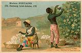 Maison Fontaine trade card, cotton harvest