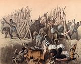 Kaffirs driving animals into a pit