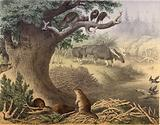 A scene in Northern Canada, the racoon, the beaver, wild turkeys, the elk, the passenger pigeon