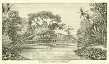 A Bamboo Bridge in Borneo