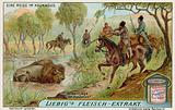 Hunting bison in a swamp