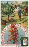 Aloes: harvesting the sap