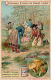 France (Brittany): chanterelles (Cantarellus cibarius)