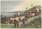 The arrival at Lake Ngami