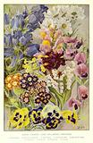 Garden Flowers, some well-known Perennials
