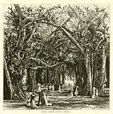 Picnic under banyan trees