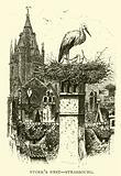 Stork's nest, Strasbourg