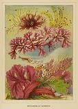 Specimens of seaweed
