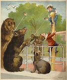 Bears baiting boys