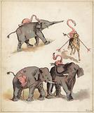 Elephants and flamingoes