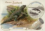 Iguanadon and Iguana Tuberinlata