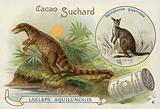 Dryptosaurus and kangaroo