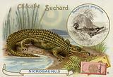 Nicrosaurus and crocodile