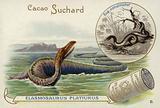 Elasmosaurus and boa constrictor