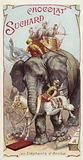The elephants of Hannibal