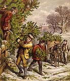 Collecting holly
