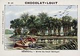 Banks of the upper Senegal River, Senegal