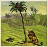 Man escaping from a lion by climbing a tree
