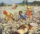 Picking cotton on an American plantation