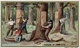 Removing the bark from cork trees