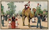 Camel, Jardin d'Acclimation, Paris