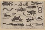 Reptiles and Insects of Various parts of the World