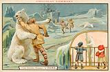 Hunting polar bears