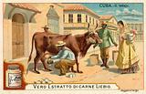 Milking, Cuba