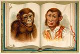 Portraits of an ape and a man