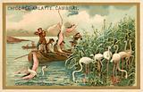 Hunting flamingos, Spain