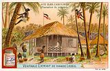 Palm plantation, Caroline Islands
