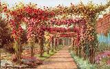 The Rose Pergola, Kew Gardens
