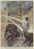 Un dramma nella Fossa degli orsi, a Berna