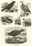 Birds of Palestine