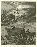 The Animals entering the Ark, Genesis, VII, 8