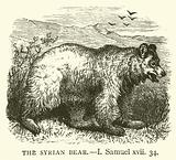 The Syrian Bear, I, Samuel, xvii, 34