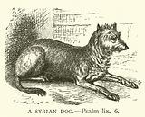 A Syrian Dog, Psalm, lix, 6