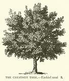The Chestnut Tree, Ezekiel, xxxi, 8