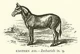 Eastern Ass, Zechariah, ix, 9