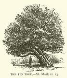 The Fig Tree, St Mark, xi, 13