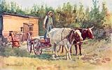 A bachelor's shack and his team of oxen