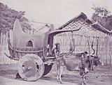 Burmese Carriage and Pair