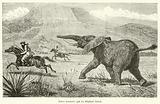 Baker poursuivi par un elephant blesse