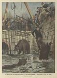 Un episodio della piena della Senna a Parigi, la fossa degli orsi allagata e gli orsi tratti di la con una gabbia